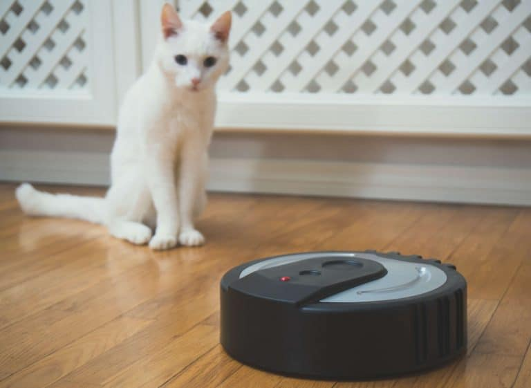 robot vacuum cleaning house with cats